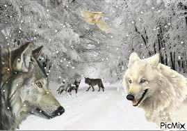 """Résultat de recherche d'images pour """"gif loup dans la neige"""""""