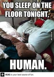 Cats on Pinterest   Cats Humor, Dogs and Kitty via Relatably.com