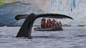Výsledek obrázku pro velryby