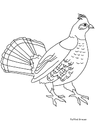 Small Picture Ruffedgrouse Animals Coloring Pages Coloring Book