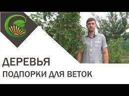 Делаем <b>подпорки</b> для плодовых <b>деревьев</b> — Сияние