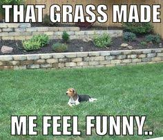 Beagle Funny on Pinterest | Beagle Art, Beagle Dog and Beagles via Relatably.com