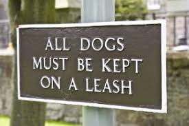 Image result for dog on a leash