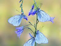 Лучших изображений доски «Бабочки»: 64 в 2019 г. | Butterflies ...