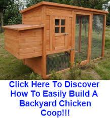 Backyard chicken coop building plans Details  Build small chicken    Chicken Co op Plans