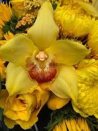 <b>Thank you</b> & <b>Just Because</b> Arrangements — URBAN FLOWERS