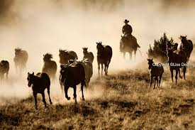 Image result for cowboys and horses pictures