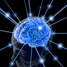 Image result for brain image
