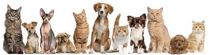 """Résultat de recherche d'images pour """"animaux de compagnie quebec"""""""