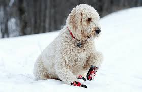 Fashion in Addition to Function: 10 Best <b>Dog Booties</b> on Amazon