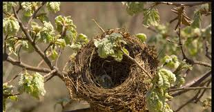 Resultado de imagen para nido y corazon roto