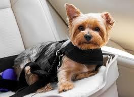 <b>Dog Car</b> Safety: Do You Need a <b>Dog Car</b> Seat, <b>Dog</b> Seat Belt ...