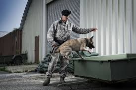 army job description k military working dog handler k 9 dogs protect u s marine corps members