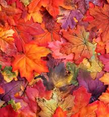 Image result for autumnal colour