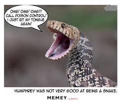 Snake Memes | Funny Snake Pictures | MEMEY.com via Relatably.com