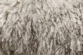 <b>Wool</b> - Wikipedia