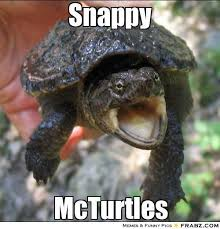Snappy... - Sarcastic Turtle Meme Generator Captionator via Relatably.com