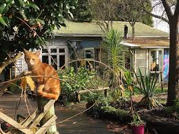 <b>Fat Cat</b> Travellers Community в Auckland, Новая Зеландия ...