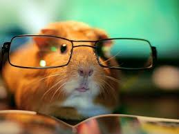 Image result for hamster glasses