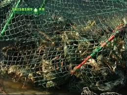 <b>Рыболовные войска</b> Димитровграда - YouTube