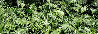 wholesale supplier of indoor plants tropical exotics brisbane brisbane office plants