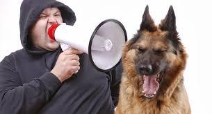 Resultado de imagen para perros ERRORES FRECUENTES EN LA EDUCACIÓN