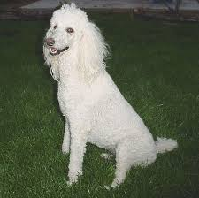 احلى الكلاب لعام 2014 images?q=tbn:ANd9GcS