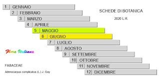 Adenocarpus complicatus [Ginestra ghiandolosa] - Flora Italiana