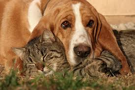 <b>Dogs</b> That Are Good With Cats: Breeds That Tend to Do Well With ...