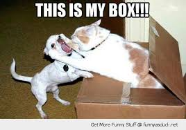 my box angry cat attacking dog | Hilariously Adorable Memes ... via Relatably.com