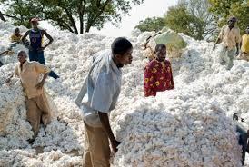 """Résultat de recherche d'images pour """"secteur Coton-textile-confection  au Cameroun"""""""