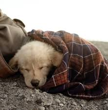 Image result for white puppy in blankets