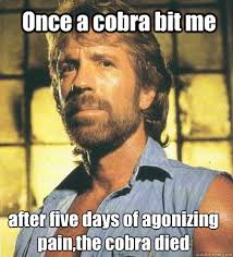 Once a cobra bit me after five days of agonizing pain,the cobra ... via Relatably.com