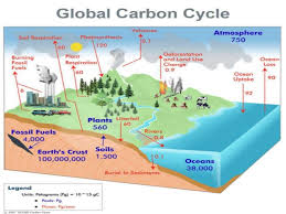 carbon cycle process essay topic   essay for youcarbon cycle process essay topic   image