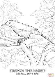 Small Picture Click the Georgia State Bird coloring pages to view printable