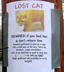 22 Hilarious And Disturbing Missing Cat Posters via Relatably.com