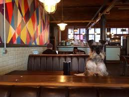 room manchester menu design mdog: twelve dog friendly places to eat and drink in manchester manchester evening news