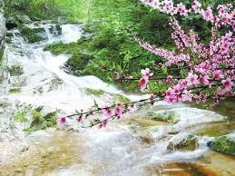 Image result for 桃花溪。張旭