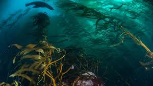 Global Stewardship | Lindblad Expeditions Community Projects