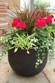 plants patio garden