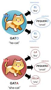 grammatical gender the grammatical gender of a noun affects the form of other words related to it for example in spanish determiners adjectives and pronouns change their