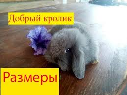 <b>Декоративные кролики</b>: <b>размеры</b>, какой будет. - YouTube