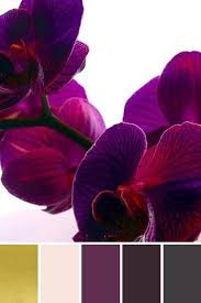 day orchid decor: color inspiration for valentines decor untitled design  color inspiration for valentines decor