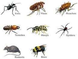 Image result for pest control pictures