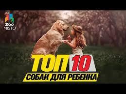 <b>Топ</b> 10 пород <b>собак</b> для ребенкаTop 10 <b>dog</b> breeds for a child ...