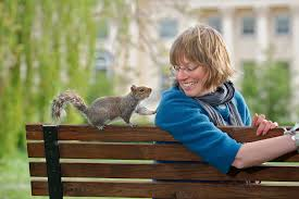 Image result for images of squirrels at the park