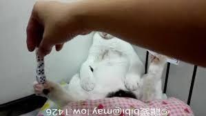 Cat Performs Dice and Card Trick | Animals | AOL.com