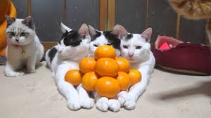 Image result for mandarin orange pyramid