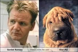 Gordon Ramsay Totally Looks Like Shar-Pei. Favorite. Gordon Ramsay Totally Looks Like Shar-Pei. LoL by: Aiyanna - hD3E76E4A