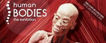 Resultado de imagen de human bodies